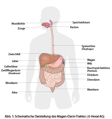 Magen-Darm-Beschwerden: Patientenratgeber   Hexal